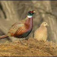 Friday, November 11 ~ Hugoton, KS ~ Pheasant Heaven Charities Banquet